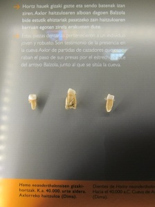 Neanderthal teeth, at the Bilbao Archaeology Museum!